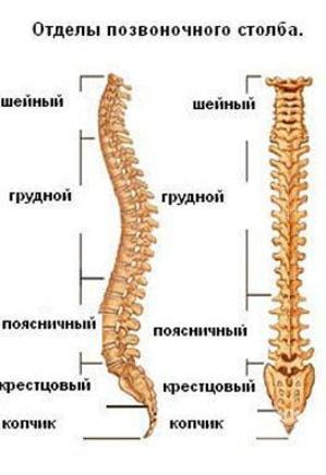 Ocsarat Medical, медичний центр - Болі по ходу хребта : цервікалгія, цервікобрахіалгіі, торакалгій, люмбалгія