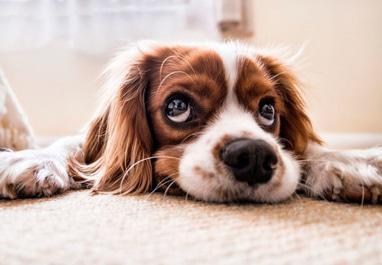 Kulum, Чистка, стирка и химчистка ковров и жалюзи - Удаление запахов животных