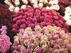 Предложение дня! Розы от 20 шт (одного сорта) – по оптовой цене