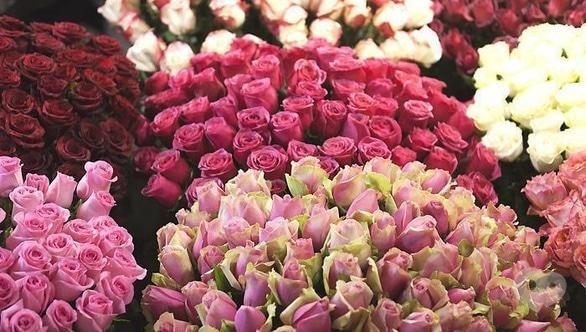 Акція – Пропозиція дня! Троянди від 20 шт (одного сорту) – за оптовою ціною