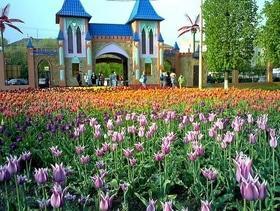 """Тур """"Тюльпановый рай – Кропивницкий дендропарк"""" от """"НАМИ"""""""